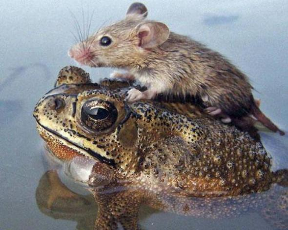 unlikely-animal-friends-18-photos-11