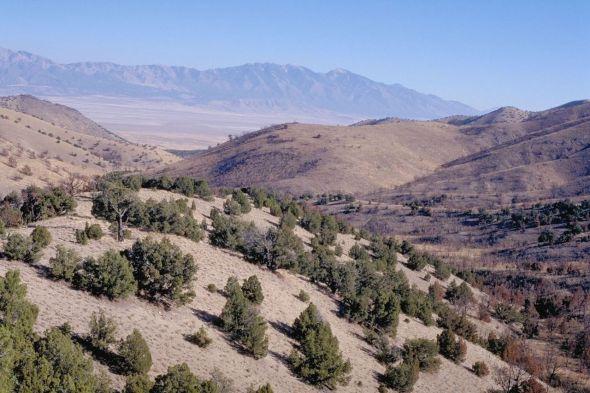 Cedar Mountain Wilderness from Wiki